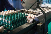 Eggs in a production line packing — Stockfoto
