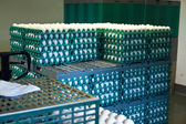 Boxes of farm eggs — Stock Photo