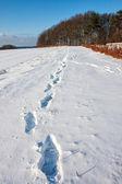 Huellas en la nieve profunda — Foto de Stock
