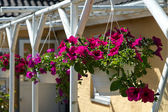 Beautiful hanging flowerpot basket — Stock Photo