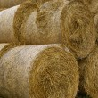Hay straw roll bales in the field — Stock Photo