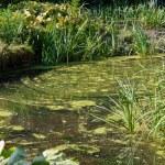 Beautiful countryside lake spring summer landscape — Stock Photo #37565015