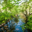 Small beautiful brook stream in a forest — Stock Photo #47246823