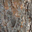 Pine bark in full frame — Stock Photo #12151164