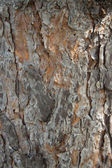 Pine bark in full frame — Stock Photo