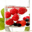 Berries floating — Stock Photo