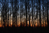 Sunset in the woods autumn forest — Stock Photo