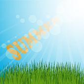 Grass background summer — Stock Vector