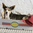 Dog in a box — Stock Photo