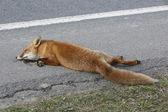 Dead fox — Stock Photo