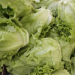 Stock Photo: Ecological lettuces