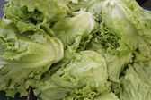 Ecological lettuces — Stock Photo