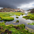 Small river and fresh blooming flowers near thermal springs in Landmannalaugar, Iceland — Stock Photo #49763821
