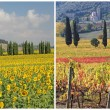 Four seasons in Tuscany — Stock Photo #11968525