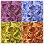 Roses set — Stock Photo #12132989