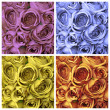 Roses set — Stock Photo