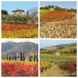 Tuscan house and vineyards in fall - Stock Photo