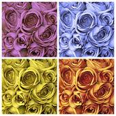 Roses set — Stock Photo