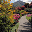 Fantastic landscape with azaleas and rhododendrons - Foto Stock