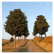 Collage with cypresses — Foto Stock