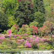 Постер, плакат: Flowering azaleas and rhododendrons