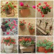 Foto Stock: Collage with geranium flowers in vintage containers