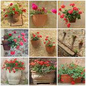 Colagem com flores de gerânio em recipientes vintage — Foto Stock