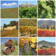 Collage with scenic images of tuscan vineyards - 图库照片