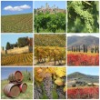 Collage with scenic images of tuscan vineyards - Foto Stock