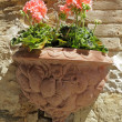Pink geranium flowers in ornamental terracotta pot - Foto Stock