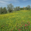 Meadow in spring — Foto Stock