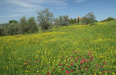 Meadow in spring — Stock Photo