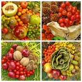 Autumnal composition — Stock Photo