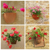 Poster with geranium flowers in rustic pots hanging on wall — Stock Photo