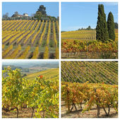 Collage with golden vineyards — Stock Photo