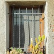 Sunny window with cacti — Stock Photo