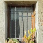 Sunny window with cacti — Stock Photo