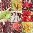 Collage with images of radicchio mix - Foto Stock
