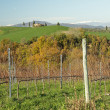 Winter vineyards in tuscan landscape - Stock Photo