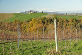 Winter vineyards in tuscan landscape — Stock Photo