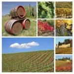Wine collage — Stock Photo #18934245