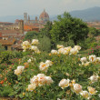 Flowering rose  in Giardino delle Rose  with panoramic view of r — Stock Photo