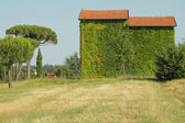 Green house with walls covered completely by ivy creeper Dozza, — Stock Photo