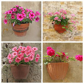 Poster with purple flowers in clay pots on wall, Italy, Europe — Stock Photo