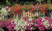 Balcony with flowering plants, Spain, Europe — Stock Photo