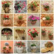Gardening collage, images of  flowerpots with flowers in Italy — Stock Photo