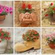 Collage with garden flowers in vase — Stock Photo