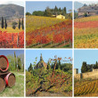 Postcard with fantastic images with tuscan vineyards in autumn, — Stock Photo