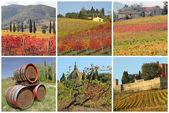 Ansichtkaart met fantastische beelden met toscaanse wijngaarden in de herfst, — Foto de Stock