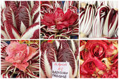 Radicchio mix — Stock Photo